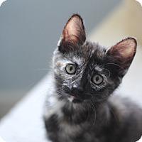 Adopt A Pet :: Sparkle - Richmond, VA