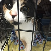 Adopt A Pet :: Cali - Schererville, IN
