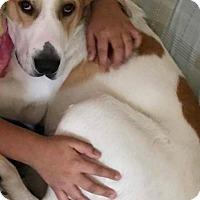 Adopt A Pet :: LUCKY - Cliffside Park, NJ