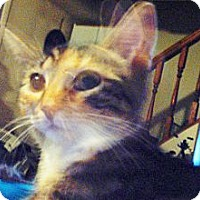 Adopt A Pet :: Frieda - Hampton, CT