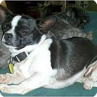 Adopt A Pet :: London - San Angelo, TX