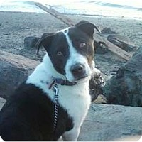 Adopt A Pet :: Lucky - FOSTER NEEDED - Seattle, WA