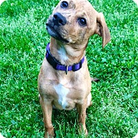 Adopt A Pet :: Maddie - Wappingers, NY