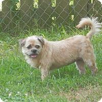 Adopt A Pet :: Emmielou - Clarksville, TN