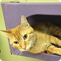 Adopt A Pet :: Sly - Medina, OH