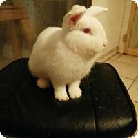 Adopt A Pet :: Romeo - Palm Coast, FL