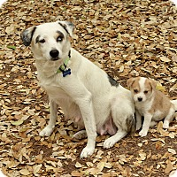 Adopt A Pet :: Cranberry - San Antonio, TX