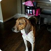 Adopt A Pet :: Rose - Bellingham, WA