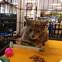 Adopt A Pet :: Varina - Avon, OH