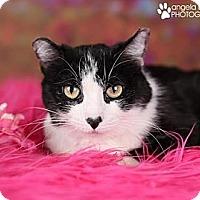 Adopt A Pet :: Tillie - Eagan, MN