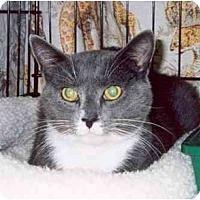Adopt A Pet :: Owlbert - Clementon, NJ