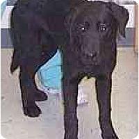 Adopt A Pet :: Tucker-FOSTER NEEDED - Seattle, WA