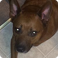 Adopt A Pet :: Oso - Valley Springs, CA