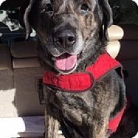 Adopt A Pet :: Herbie - Torrance, CA