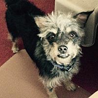 Adopt A Pet :: Ben - Jacksonville, FL