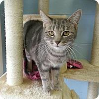 Adopt A Pet :: Gloria - Shinnston, WV