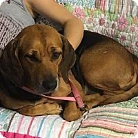 Adopt A Pet :: Nona II - Tampa, FL