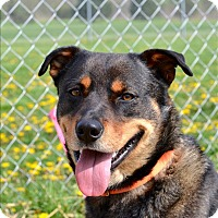 Adopt A Pet :: Anderson - Delaware, OH