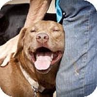 Adopt A Pet :: Rheanna - Katy, TX