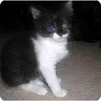 Adopt A Pet :: Bernadette - Summerville, SC