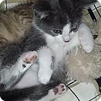 Adopt A Pet :: Ja'nel - Sterling Hgts, MI