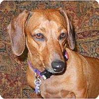 Adopt A Pet :: Molly - Bryan, TX