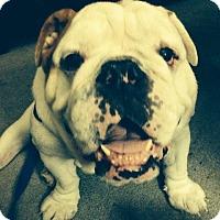 Adopt A Pet :: Jack - Cibolo, TX