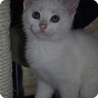Adopt A Pet :: Snow White - Hamilton, ON