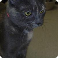 Adopt A Pet :: Samantha - Hamburg, NY