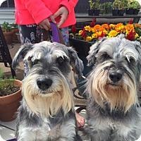 Adopt A Pet :: Bob and Bojangles - Laurel, MD