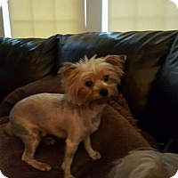 Adopt A Pet :: Missy 1 in CT - Manchester, CT