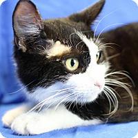 Adopt A Pet :: Jasper - Winston-Salem, NC