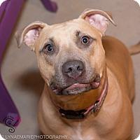 Adopt A Pet :: Sydney - Grand Rapids, MI