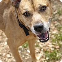 Adopt A Pet :: Sparky - Camden, DE
