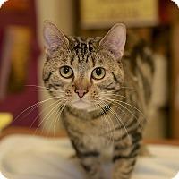 Adopt A Pet :: Monkey - Medina, OH