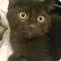 Adopt A Pet :: Pixel - Ogden, UT