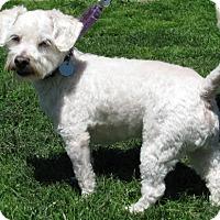 Adopt A Pet :: Payton - New Kensington, PA