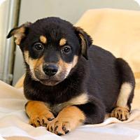 Adopt A Pet :: Bibi - Los Angeles, CA