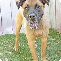 Adopt A Pet :: Barlow - Inverness, FL