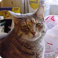 Adopt A Pet :: Blue Bell - Dallas, TX