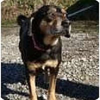 Adopt A Pet :: Florence (REDUCED) - Staunton, VA