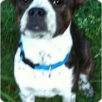 Adopt A Pet :: SKY in TN - Wakefield, RI