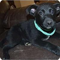 Adopt A Pet :: Sky - Windham, NH
