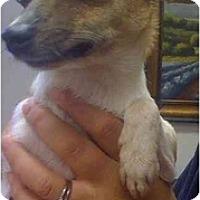 Adopt A Pet :: Suzette - Fowler, CA