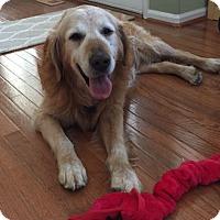 Adopt A Pet :: Murphy - Denver, CO