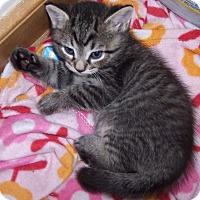 Adopt A Pet :: Kyle - Richmond, VA