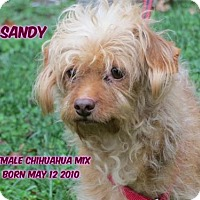 Chihuahua/Dachshund Mix Dog for adoption in Huddleston, Virginia - Sandy