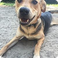 Adopt A Pet :: Mocha - Millersville, MD