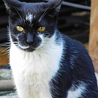 Adopt A Pet :: AJ - Makawao, HI