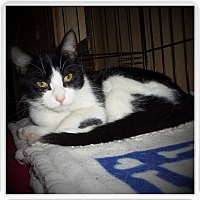 Adopt A Pet :: DOMINO - Medford, WI
